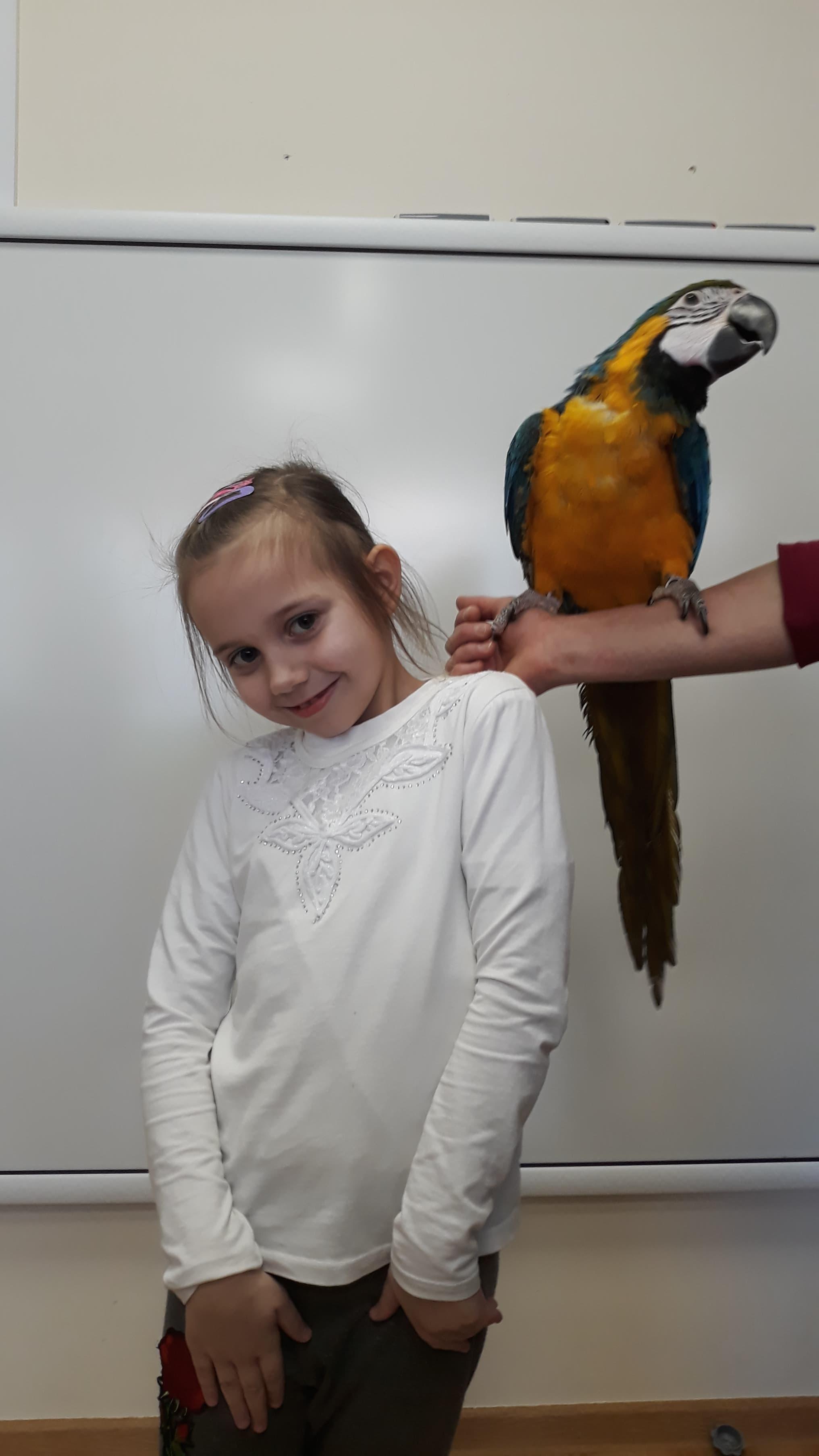 Wizyta papugi